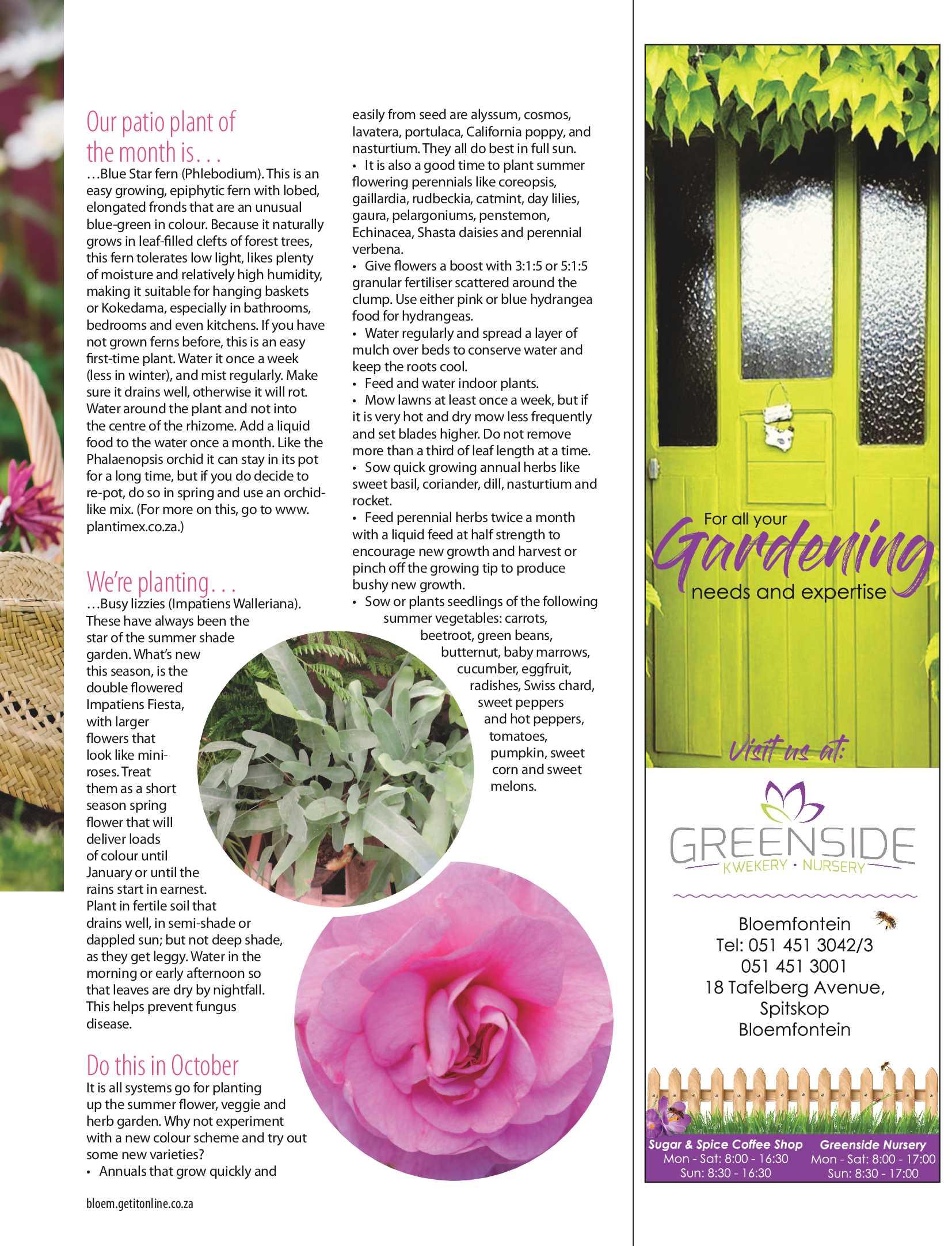get-bloemfontein-october-epapers-page-31